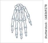 Bones Of Hand. Skeleton Part....