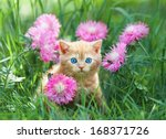 Stock photo cute little kitten sitting in flower meadow 168371726