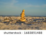 Close Up Of A Seashell And...