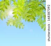 postcard with fresh green... | Shutterstock . vector #168387392