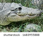 Top View Of Crocodile In Zoo