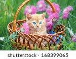Cute Little Kitten Sitting In ...