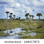 Florida Wetlands With Birds An...