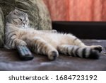 A Lazy Fat Cat Is Lying Asleep...