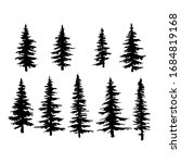 Vector Spruce Tree  Ink Plant...
