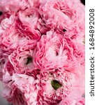 Small photo of Beautiful pink pon-pon ranunculus Hermione texture, close up view