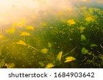 underwater seaweeds and foliage ... | Shutterstock . vector #1684903642