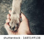 Dog's Paw In Human Hand....
