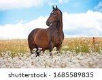 Portrait Of Nice Brown Horse...