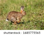 Wild Cute Easter Rabbit Is ...