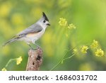 Titmouse Perched On A Branch In ...
