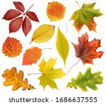 Collection Of Autumn Leaves...