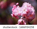 As Springtime Comes  The Petal...
