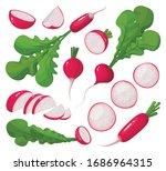 red radish vector cartoon set... | Shutterstock .eps vector #1686964315