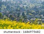 Wildflowers And Suburban...