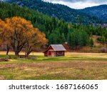 Small Barn With Golden Trees...