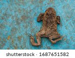 Dried Frog On A Blue Metal...
