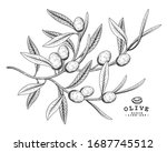 vector sketch olive decorative... | Shutterstock .eps vector #1687745512