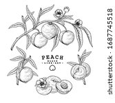 vector sketch peach decorative... | Shutterstock .eps vector #1687745518