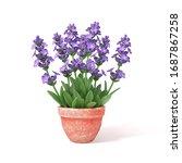 Beautiful Purple Lavender Herb...