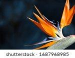 Bird Of Paradise Tropical...