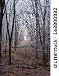 winter forest | Shutterstock . vector #168800882