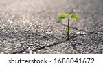 A Small Plant Grows From A...