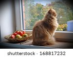 Stock photo ginger cat sitting on the windowsill near the apple orchard and looks out the window 168817232