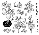 vector sketch citrus fruit... | Shutterstock .eps vector #1688550928