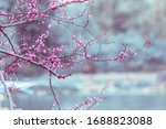 Delicate Branches With Pink...