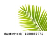 Beautiful Green Palm Leaf...