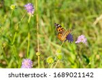 Butterfly On A Flower In A...