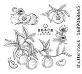 vector sketch peach decorative...   Shutterstock .eps vector #1689068665