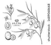 vector sketch olive decorative... | Shutterstock .eps vector #1689068668