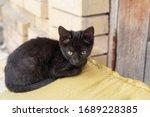 Homeless Black Kitten Sits Near ...
