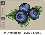 Blueberrys Vector Illustration...