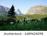 Bear Grass Wildflowers In...