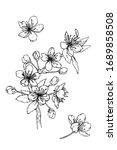 vector sketch of a branch of a... | Shutterstock .eps vector #1689858508