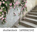 Stone Stairs In Pink Roses Bus...