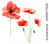 Red Summer Poppies With Stems...
