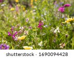 Flower Meadow With Wild Flowers ...