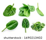 Spinach. Creative Layout Made...