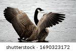 Seasonal Birds Migrations. The...