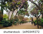 Wide alley with green trees, purple flowers and trimmed bushes. Spring time. Barcelona, Spain. - stock photo