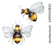 Two Bees  Watercolor Hand Draw...