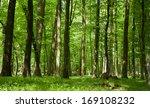 forest in spring.sunny morning... | Shutterstock . vector #169108232