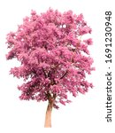 Isolated Tree With Pink Leaves...