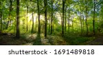 Panorama of a green forest of...