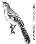 Mockingbird Is A Singing Bird...