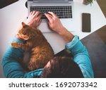 Ginger Cat Sleeping On Man's...